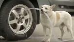 Mükemmel Köpek İnsanlık Dersi Veriyor
