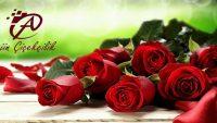 Kıbrıs'ta Çiçeğin Sanata Dönüştüğü Tek Adres ARJİN ÇİÇEKÇİLİK