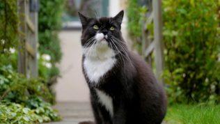 Kedi Besleme Konusunda Önemli Bilgiler